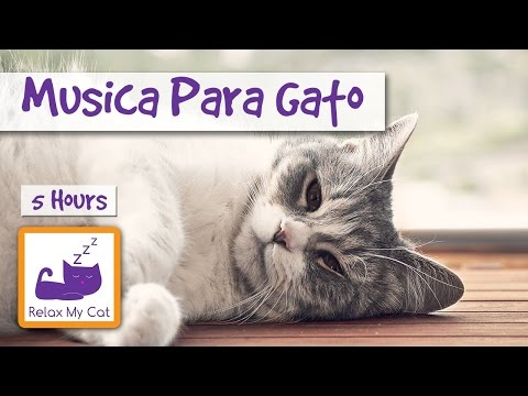 FIVE HOURS OF MUSIC FOR CATS