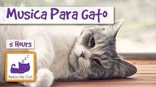CINCO HORAS DE MÚSICA PARA GATOS