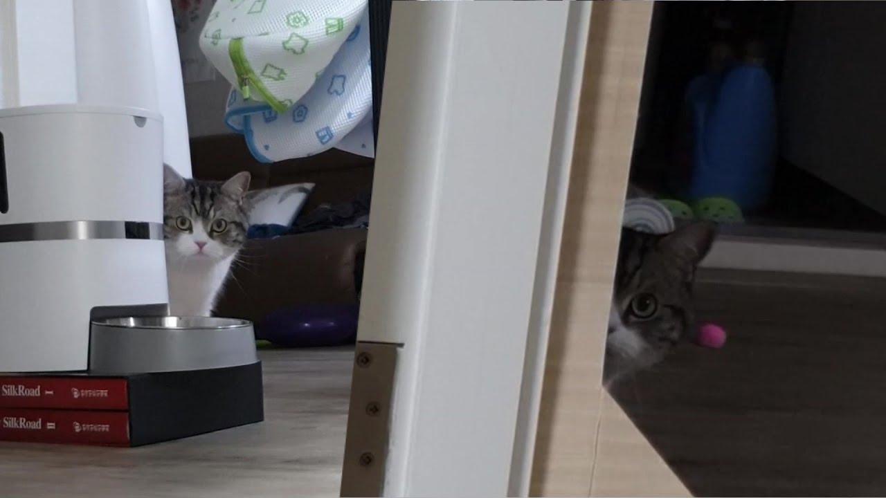 고양이 공포영상 (무서움주의)