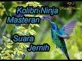 Suara Masteran Burung Kolibri Ninja Luar Biasa Gacorr Cocok Untuk Masteran Maupun Pancingan  Mp3 - Mp4 Download