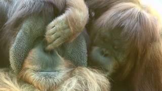 El mejor Zoo del mundo - San Diego #2