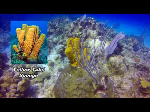 Cayman Island Reef Diving