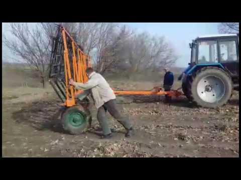 Трава эхинацея пурпурная - применение и противопоказания