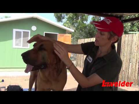 First Aid for anti-poaching dogs of the Kruger National Park