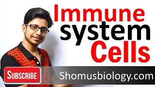 Cells of immune system