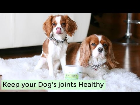 Healthy Dog Joints with Fera Pet Organics | Unboxing Herky Milton Cavalier King Charles Puppy