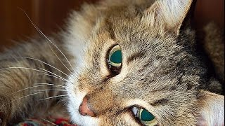 WHY DO CATS SPRAY? WHAT IT MEANS AND HOW TO MAKE IT STOP