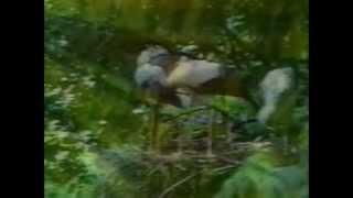 Time Warp - Bird Rave