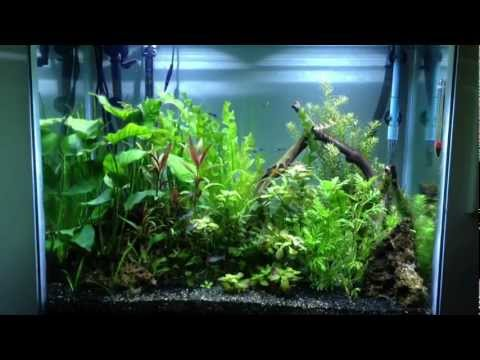 55 Gallon Planted Aquarium Jungle Aquascape - YouTube