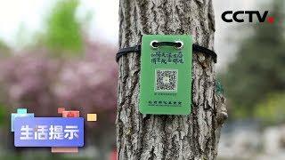 《生活提示》足不出户也可植树 20200503 | CCTV