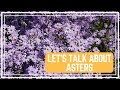 Let's Talk About Asters 🌸/ Colorful Gardener