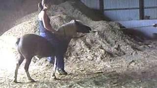 Goat The Pony