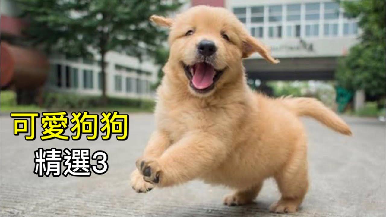 柴犬柚醬「可愛狗狗精選3」