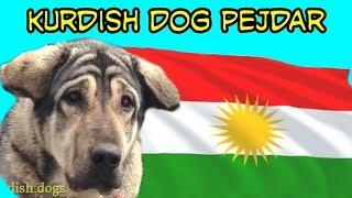 Top 10 Big -kurdish Dog Pshdar  Assyrian Shepherd Dog Breed Mesopotamia