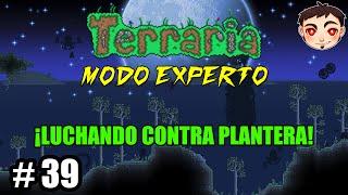 Terraria [T4] Ep. 39 - ¡LUCHANDO CONTRA PLANTERA!