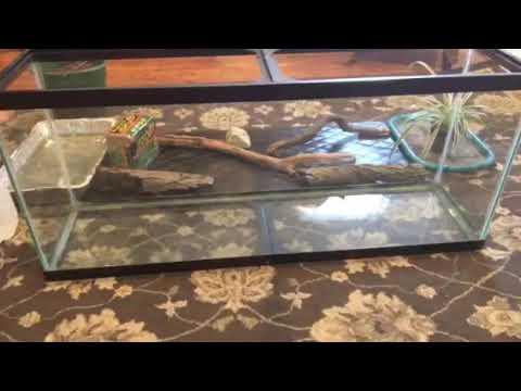 Terrarium scape for a green iguana