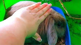 Кролик заболел. Что делать? Желудочно кишечный стаз кроликов.