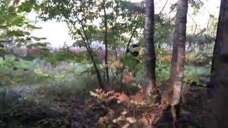 Поход за грибами
