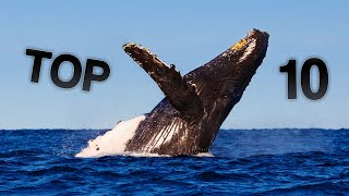 Top 10 Biggest Whales