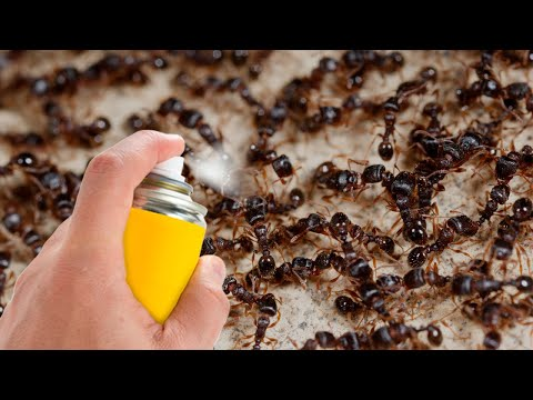 How to Get Rid of Ants and Flies Quickly and Naturally
