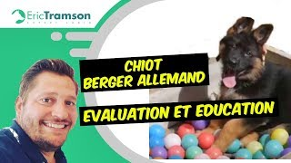 CHIOT BERGER ALLEMAND/EDUCATION/EVALUATION/ERIC TRAMSON