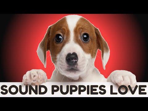 Sound Puppies Love To Hear | HQ