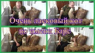 Очень ласковый кот по имени Барс