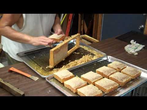 Cutting Comb Honey from the frames. Honeybee Comb Honey