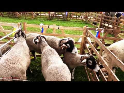 Dufton Show 2016 -  Animals and Fell-Runners