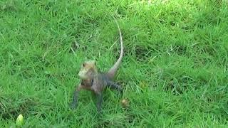 Животные, кого только не встретишь, гуляя по острову на Мальдивах! Аnimals
