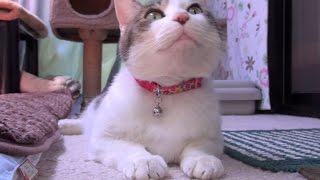 【怠惰な猫が以外にいい】Cats are cute even if not move too much.