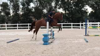 5yo mare by Andiamo Z x Larino. Top quality horse, scope and careful. GranPrix prospect