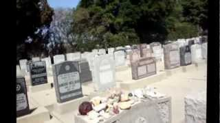 The Three Stooges: Gravesites of Curly and Shemp