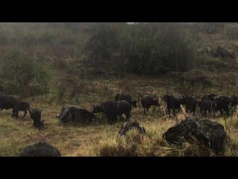 Arusha National Park. Tanzania. feb-1-2017
