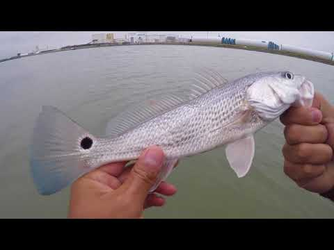 Rat Reds For Days At The Rincon Channel || Corpus Christi, Tx Wade Fishing