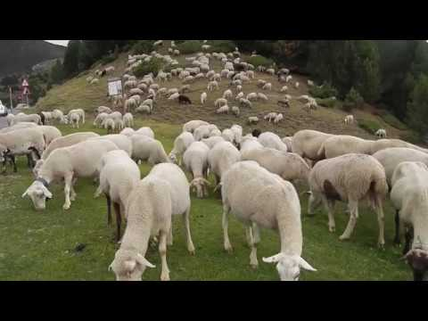 06 Christian Symbol Lamb Of God Part 1 1