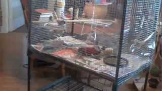 Homemade Flight Cage For Small Birds Like Finch #2