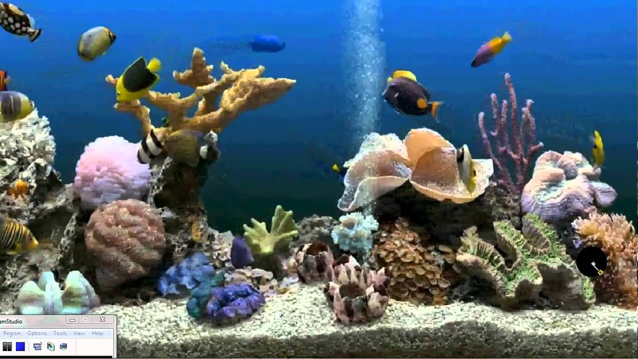 Fish 3d Live Wallpaper Download How To Get An Aquarium As Your Desktop Background Xp