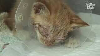 Слепой котенок хочет видеть свою маму _ животное в кризисе EP22.Blind Cat Wants To See His Mom