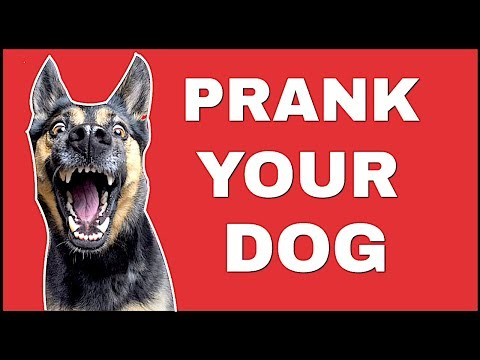 Funny Sound To Prank Your Dog ( LAUGH HARD )