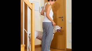 How To Stop Your Large Dog From Dashing Out The Door