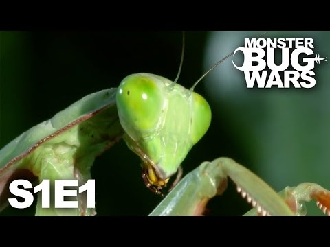 MONSTER BUG WARS | Death at Midnight | S1E1