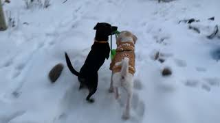 Puppies enjoying the snow funny dog video