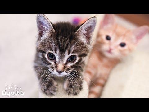 Corsica + her kittens on TinyKittens Rescue Kitten TV