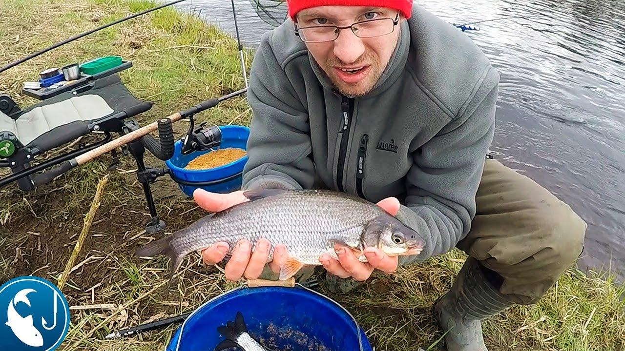 ловля рыбца фидером