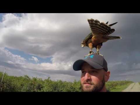 Bird Abatement - Washington