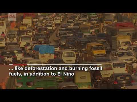 Carbon Gases