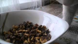 Кот ест орехи жаренные