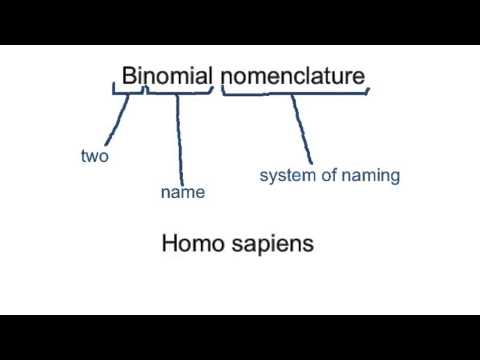 5.5.1 Outline the binomial system of nomenclature
