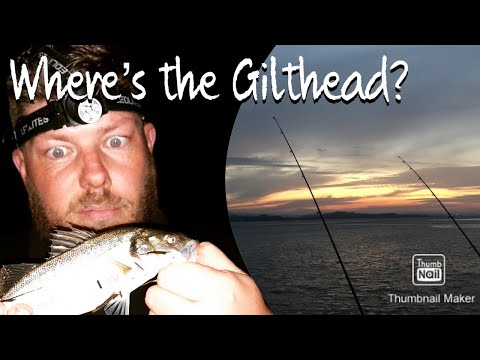 The Quest For GILTHEAD BREAM Part 2. BASS In Numbers. Sea Fishing Devon Coast UK Beach Night Angling